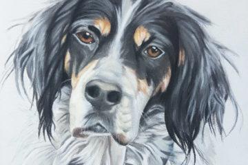 Tierportrait Hund
