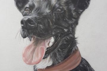 Portrait Hund Inga Prasse