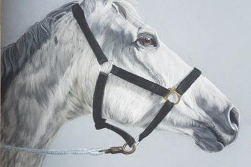 Portrait Pferd, Inga Prasse, Tierportrait