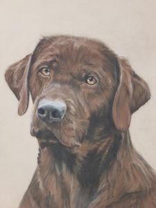 Hundeportrait, Portrait Hund, Inga Prasse, Tierportrait