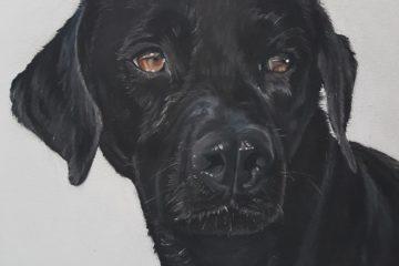 Tierportrait, Portrait Hund, Inga Prasse