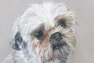 Tierportrait, Hund, Inga Prasse